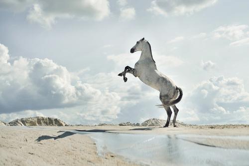 Fotomural cal, plajă, nisip, apă, nori