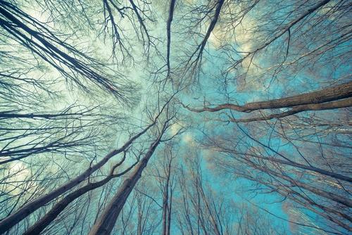 Fotomural pădure, pădure magică, interior mărit, dormitor, sufragerie, copaci