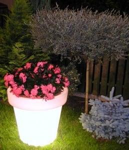 Floare iluminată Bordato Liscio small 3
