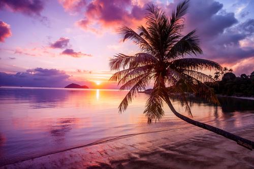 Fotomural plaja, apus de soare, palmier, nuanțe de violet, portocaliu și albastru