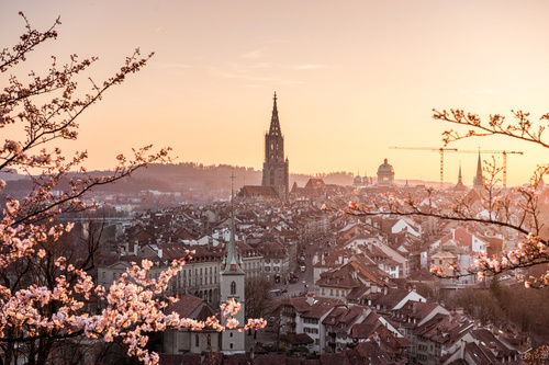 Fotomural apus de soare, Berna, cireș înflorit, Catedrala Berna, oraș vechi