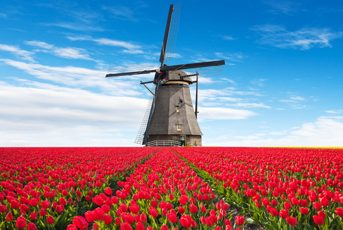 Fotomural Tulipuri, mori de vânt, flori 3D, tapet roșu