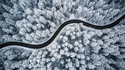 Tapet de pădure de iarnă, copaci, zăpadă, drum prin pădure, vedere aeriană